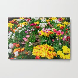 Tulips in Color Metal Print
