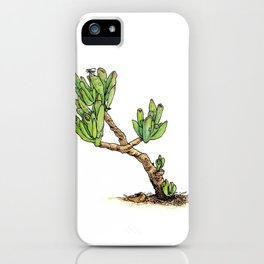 CRASSULA OVATA iPhone Case
