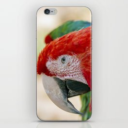 Green Winged Macaw Portrait iPhone Skin