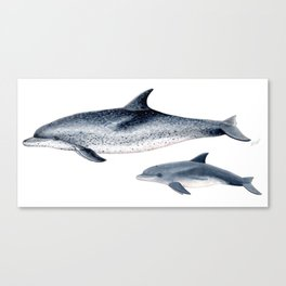 Atlantic spotted dolphin Canvas Print