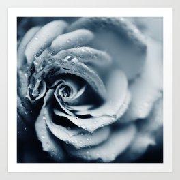 Rose - powder blue Art Print
