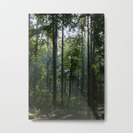 Green forest shrouded the sun. Metal Print