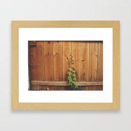 ivy climbing a wall Framed Art Print