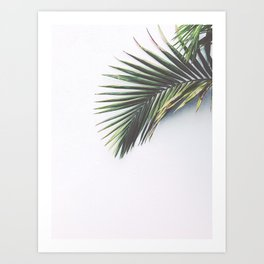 palm leaf- los angeles, CA Art Print