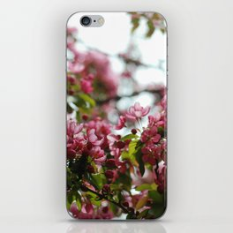 Pink Blossoms #01 iPhone Skin