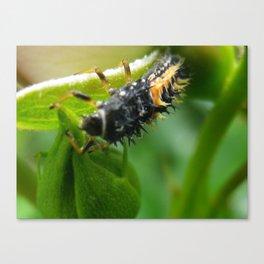 ladybug larva Canvas Print