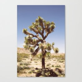 Joshua Tree (Color) Canvas Print
