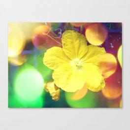 Secret Garden | Cucumber flower Canvas Print