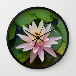 Bee with Pink Waterlily Wall Clock