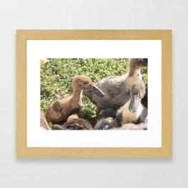 Duckies Framed Art Print