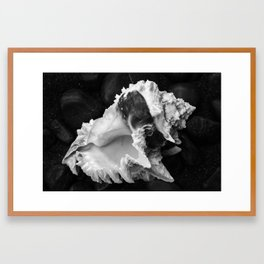 Shell No.12 Framed Art Print