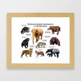Endangered Animals of Sumatra Framed Art Print
