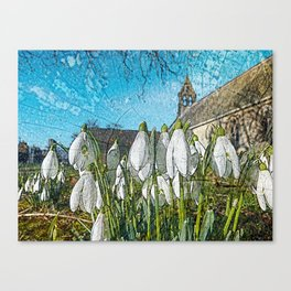 Snowdrops on texture Canvas Print