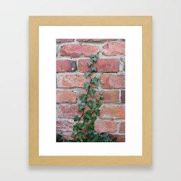Crawling Ivy Framed Art Print