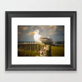 Seagull on a Fence Framed Art Print