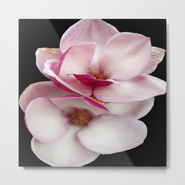 tulip magnolia twins (black bg square) Metal Print
