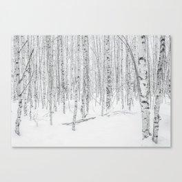 Swedish Birch Trees Canvas Print