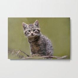 Scottish Wildcat Kitten Metal Print