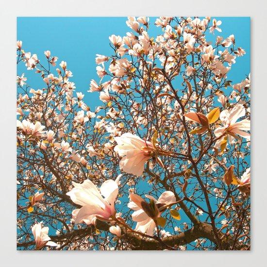 magnolia tree II Canvas Print