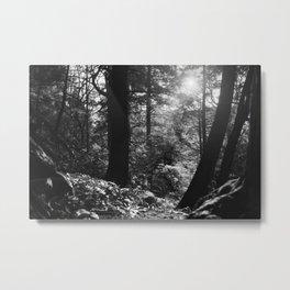 Hocking Hills Metal Print