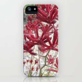 Red Kangaroo Paw iPhone Case