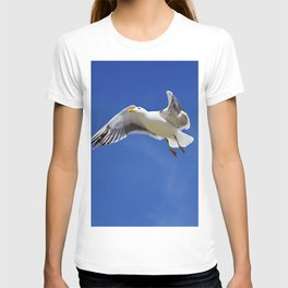 Seagull taking off T-shirt