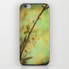 Springtime Blossom iPhone & iPod Skin