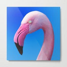 Pink Flamingo Portrait Close Up Metal Print