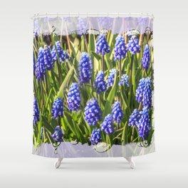 Grape hyacinths muscari Shower Curtain