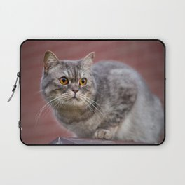 British shorthair cat on the wall Laptop Sleeve