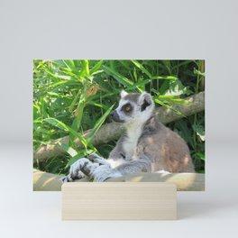 Cute and relaxed Ring-tailed lemur (lemur catta) Mini Art Print