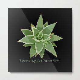 Succulent Species Echeveria agavoides 'Martin's Hybrid' Black Metal Print