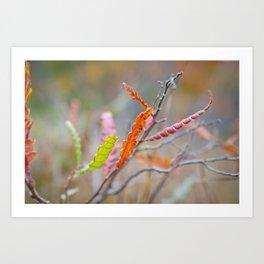 Field Colours Art Print