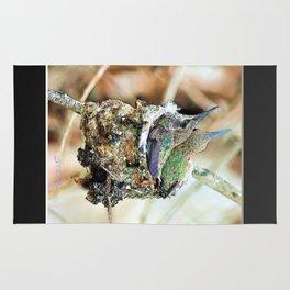 The Hummingbird Nest. © J&S Montague. Rug