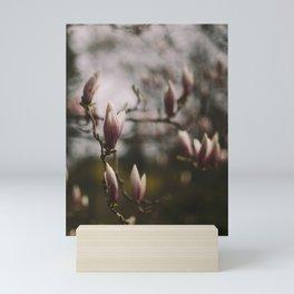 Magnolias Mini Art Print