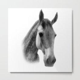 Dapple Horse Metal Print