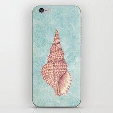 sea shell iPhone & iPod Skin