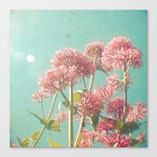 Pink Milkweed Canvas Print