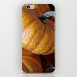 Perfect Pumpkins iPhone Skin
