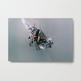 Spider Macro Metal Print