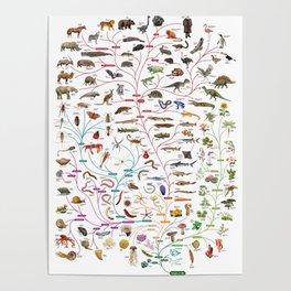 Darwinian Evolution The Tree of Life Poster