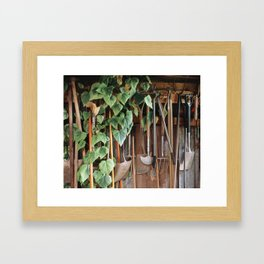 Hedera Ivy growing among gardening tools in a shed. UK. (Shot on film). Framed Art Print