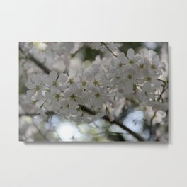 Spring in White Metal Print