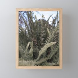 Fern Leaves Framed Mini Art Print