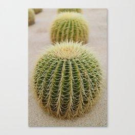 Cabo Cactus IV Canvas Print