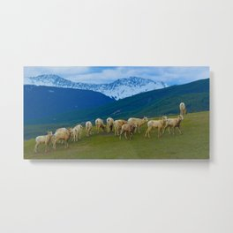 Female Mountain Goats on Old Fort Point in Jasper National Park, Canada Metal Print