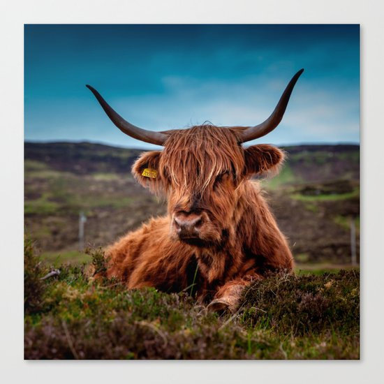 Scottish Highland longhorns Rancher by marios