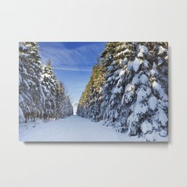 Trail through beautiful winter forest on a clear day Metal Print