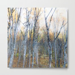 Silver Birches Metal Print
