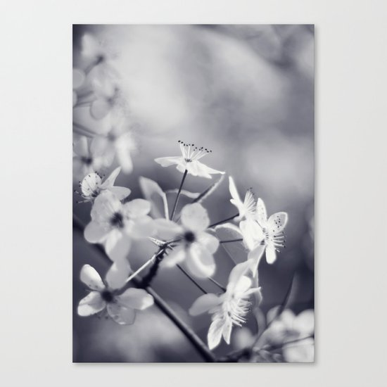 Pear Blossoms in Black and White Canvas Print